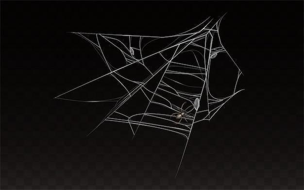 Zbiór realistycznych cobweb z pająk na nim. Darmowych Wektorów