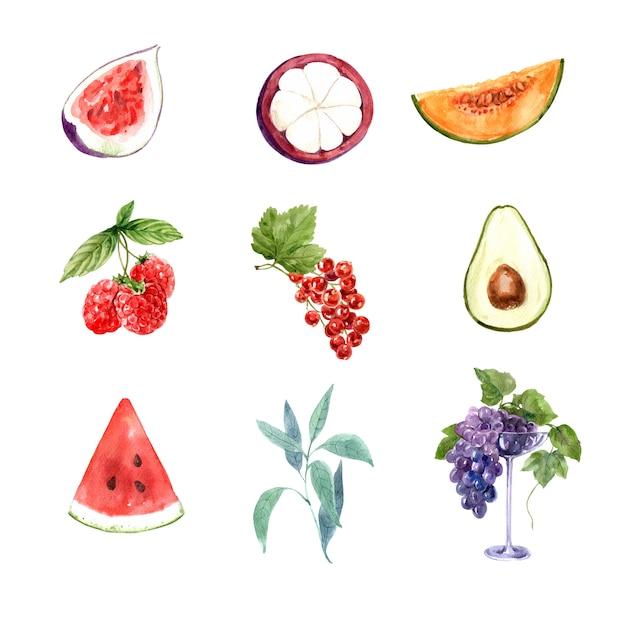 Zbiór różnych na białym tle akwarela owoców Darmowych Wektorów