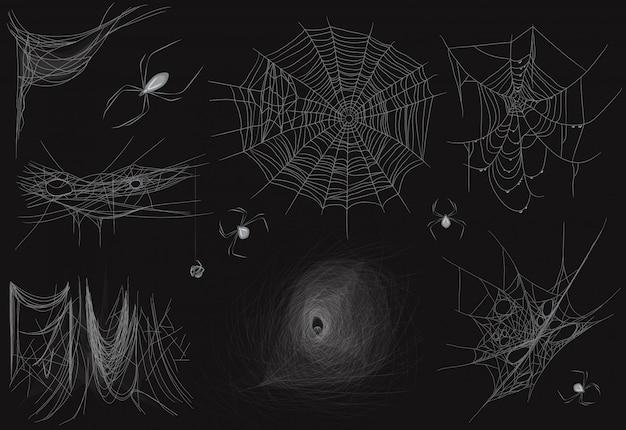 Zbiór różnych realistycznych wektor cienkich pająka Premium Wektorów