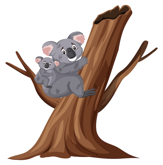 Zdradzone Koale Wspina Się Drzewa Na Bielu Premium Wektorów