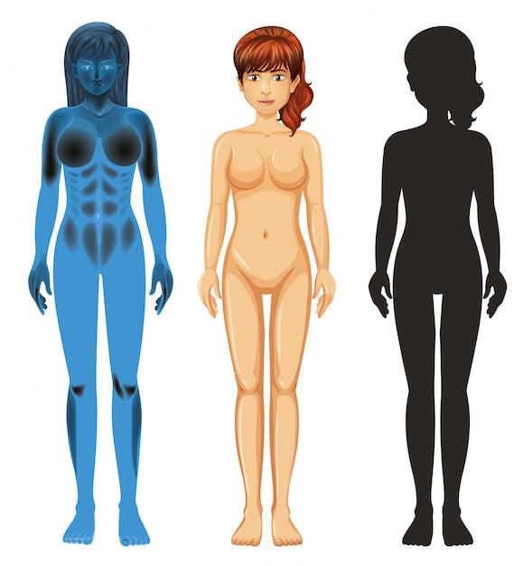 Żeńska Ludzka Anatomia Na Bielu Darmowych Wektorów