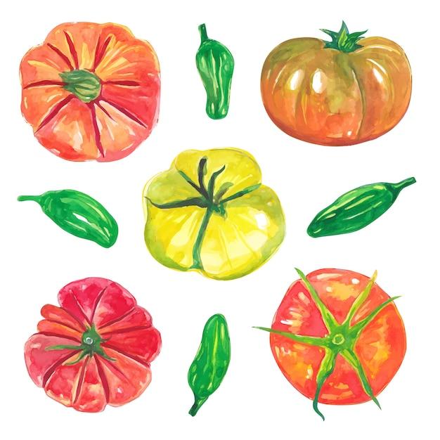 Zestaw Akwarela Czerwonych Pomidorów I Kolekcji Zielonych Warzyw Wegańskich Chili Premium Wektorów