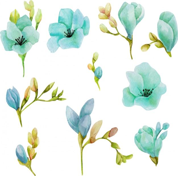 Zestaw akwarela niebieskie kwiaty frezji Premium Wektorów
