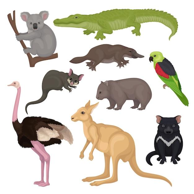 Zestaw Australijskich Zwierząt I Ptaków. Dzikie Stworzenia. Motyw Fauny. Szczegółowe Elementy Książki Lub Plakatu Z Zoologii Premium Wektorów