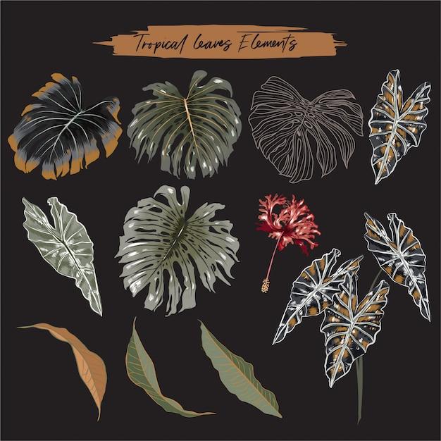 Zestaw Botanicznych Liści Tropikalnych Liści Premium Wektorów