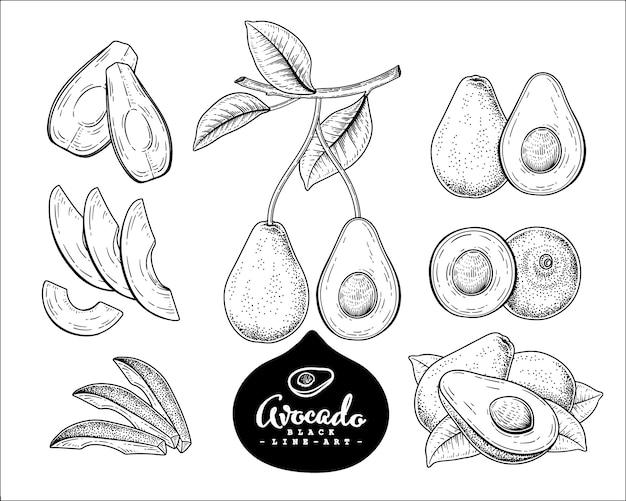 Zestaw Dekoracyjny Awokado Szkic Wektor. Ręcznie Rysowane Ilustracje Botaniczne. Premium Wektorów