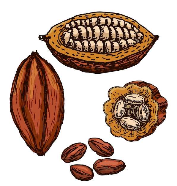 Zestaw do rysowania kakao pożywienie Premium Wektorów