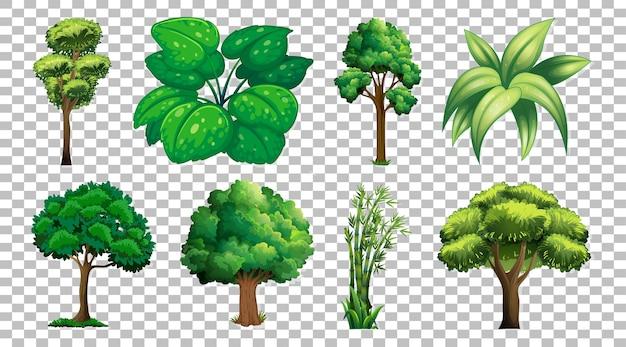 Zestaw Drzewa Na Przezroczystym Darmowych Wektorów