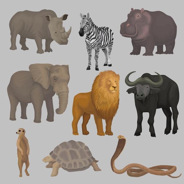 Zestaw Dzikich Zwierząt Afrykańskich, Hipopotam, Słoń, żyrafa, Nosorożec, żółw, Bawół, Zebra, Lew, Wąż Ilustracje Premium Wektorów