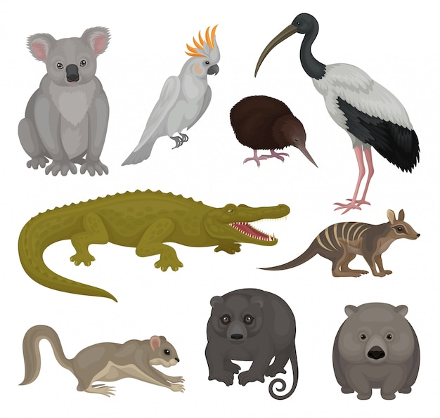 Zestaw Dzikich Zwierząt I Ptaków Australijskich. Motyw Fauny. Szczegółowe Elementy Plakatu Zoo Lub Książki Dla Dzieci Premium Wektorów