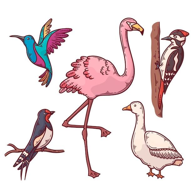 Zestaw Egzotycznych I Domowych Ptaków Darmowych Wektorów