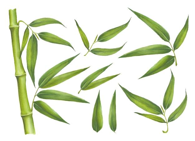 Zestaw Elementów Bambusa Na Białym Tle Premium Wektorów