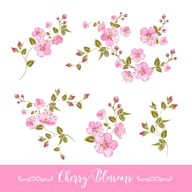Zestaw elementów wiosennych kwiatów Premium Wektorów