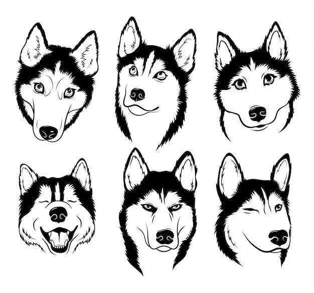 Zestaw Husky. Kolekcja Psów Rodowodowych. Czarno-biały Ilustracja Psa Husky. Premium Wektorów