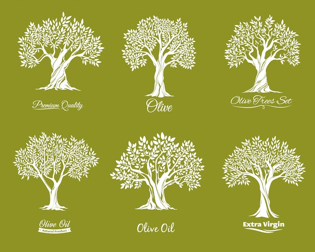 Zestaw Ikon Gospodarstwa Drzew Oliwnych Premium Wektorów
