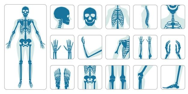 Zestaw ikon kości ortopedycznych i szkielet człowieka Premium Wektorów