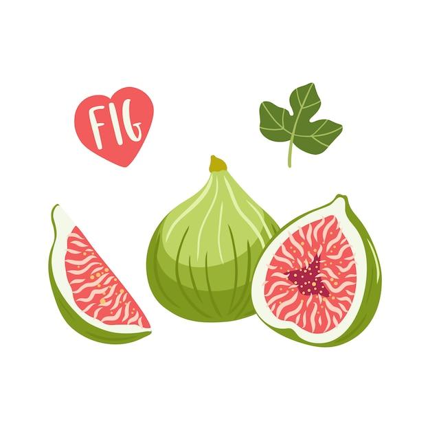 Zestaw Ilustracji Owoców Figi. Premium Wektorów