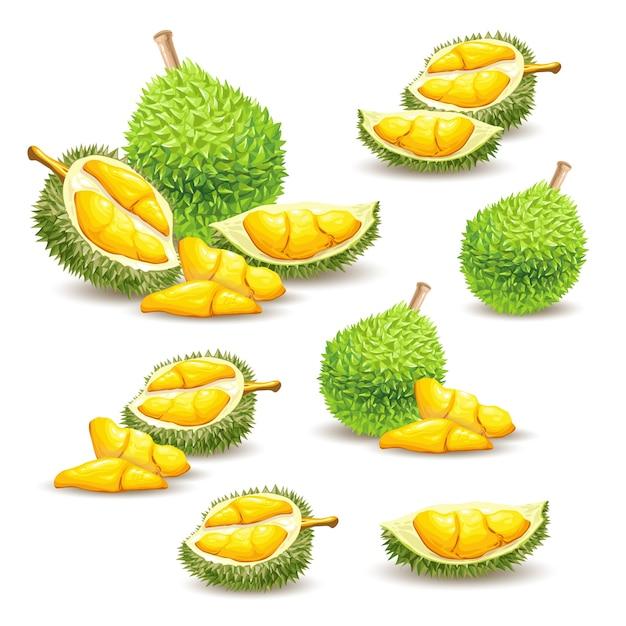 Zestaw Ilustracji Wektorowych, Ikony Owoców Durian Darmowych Wektorów