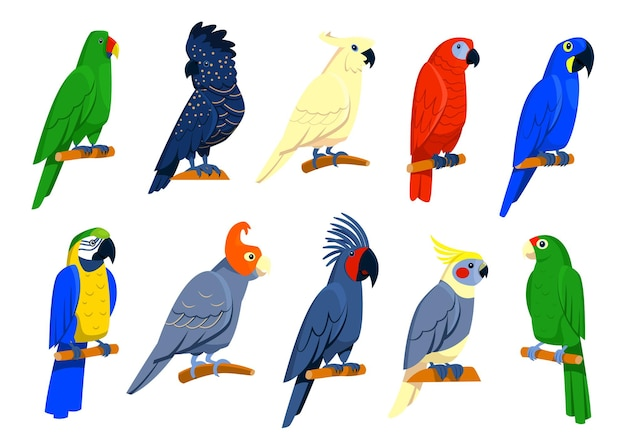 Zestaw Jasne Tropikalne Papugi. Darmowych Wektorów
