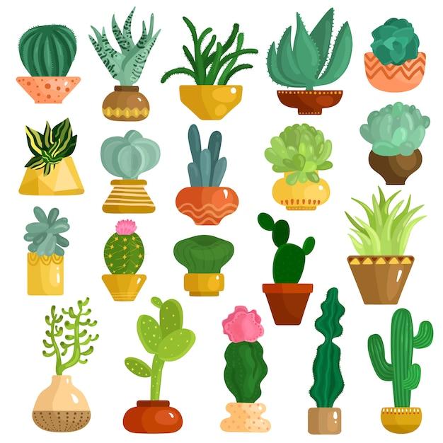 Zestaw kaktusów sukulentów w doniczkach Darmowych Wektorów
