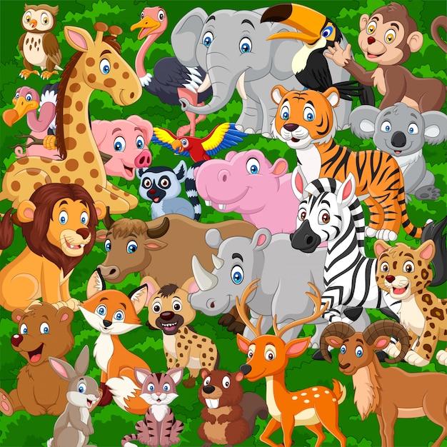 Zestaw Kolekcja Kreskówka Dzikich Zwierząt Premium Wektorów