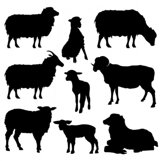 Zestaw kolekcja owiec sylwetki na białym tle Premium Wektorów