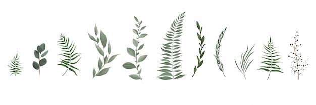 Zestaw Kolekcja Zielonych Liści Ziół W Stylu Akwareli. Premium Wektorów