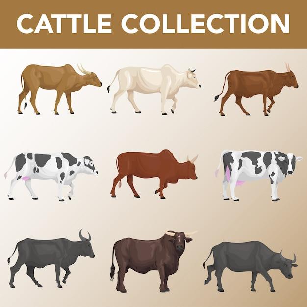 Zestaw kolekcji ras bydła Premium Wektorów