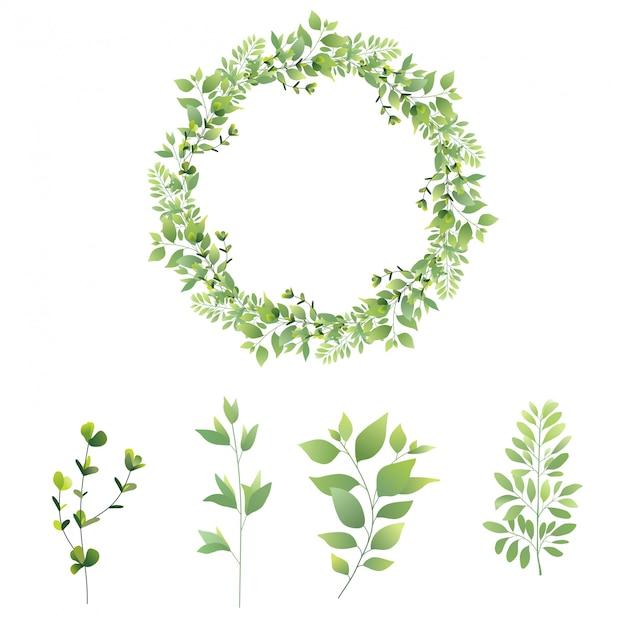 Zestaw kolekcji zielonych liści Premium Wektorów