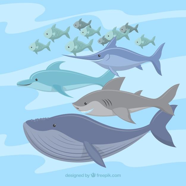 Zestaw kolorowych ryb w stylu płaski Darmowych Wektorów