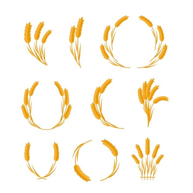Zestaw koncepcji wektor uszy pszenicy w płaska konstrukcja. Premium Wektorów