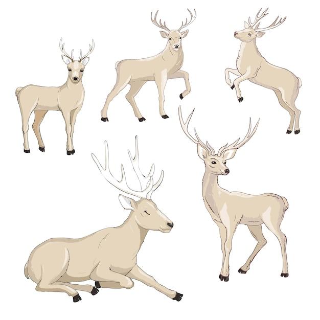 Zestaw kreskówka ładny jelenia. Premium Wektorów