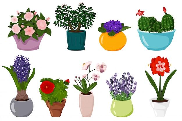 Zestaw Kwiatów Doniczkowych. Kwitnąca Roślina Doniczkowa Premium Wektorów