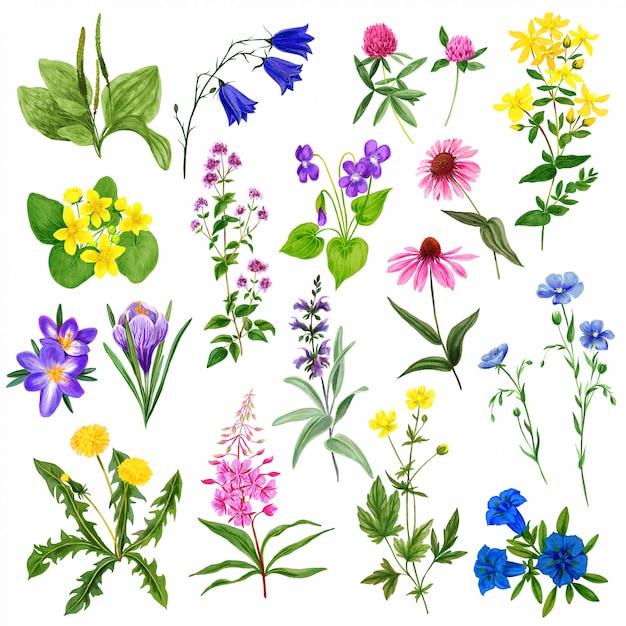 Zestaw Kwiatów Pole Akwarela, Dzikie Zioła I Rośliny Premium Wektorów