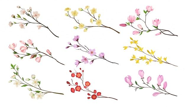 Zestaw Kwitnących Gałęzi Drzew Owocowych. Gałązki Z Kwiatami I Zielonymi Liśćmi. Motyw Natury. Szczegółowe Ikony Premium Wektorów