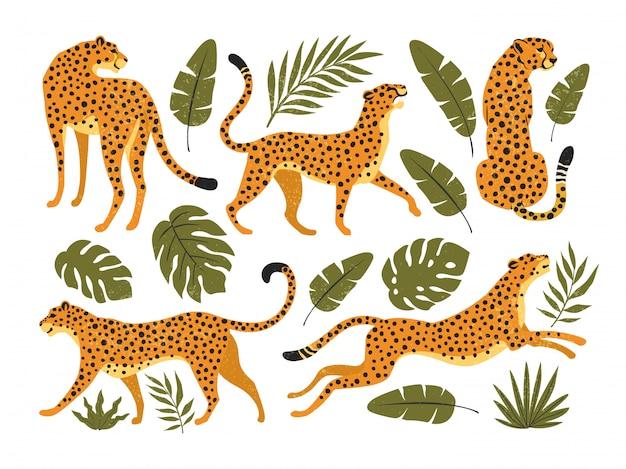 Zestaw Lampartów Lub Gepardów I Liści Tropikalnych. Modna Ilustracja. Premium Wektorów