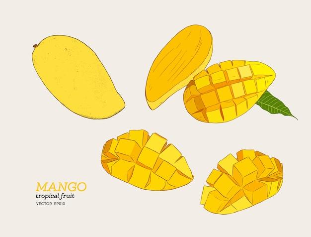 Zestaw mango Premium Wektorów