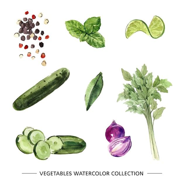 Zestaw Na Białym Tle Akwarela Warzyw Darmowych Wektorów