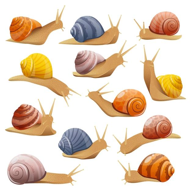 Zestaw Ozdobnych ślimaków Darmowych Wektorów