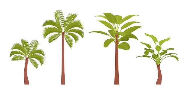 Zestaw Palmy Premium Wektorów