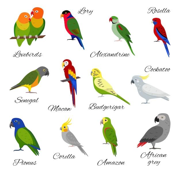 Zestaw Papugi Premium Wektorów