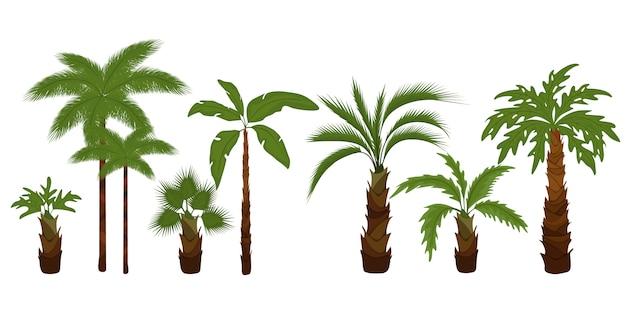Zestaw Płaskich Ilustracji Palmy. Tropikalne Zielone Liście Drzew, Palmy Plażowe I Zieleń Kalifornijska Retro. Premium Wektorów