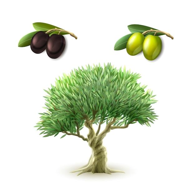 Zestaw podstawowych produktów z oliwy z oliwek Darmowych Wektorów