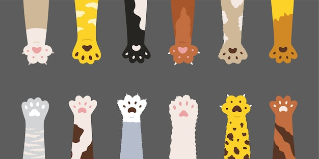 Zestaw Puszystych łap Wielobarwnych Kotów Darmowych Wektorów