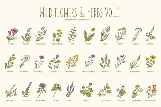 Zestaw Ręcznie Rysowane Dzikich Kwiatów I Ziół Premium Wektorów