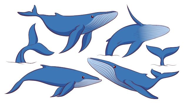 Zestaw Ręcznie Rysowane Płetwal Błękitny Premium Wektorów