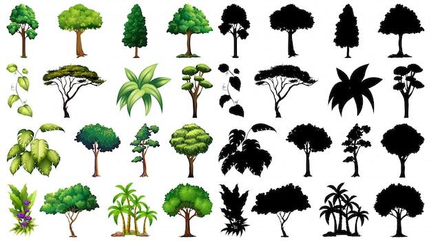 Zestaw Roślin I Drzew Z Jego Sylwetka Darmowych Wektorów