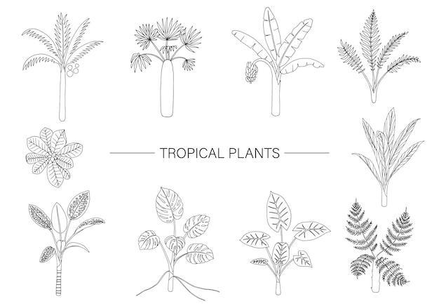 Zestaw Roślin Tropikalnych. Rysowanie Linii Liści Dżungli. Premium Wektorów