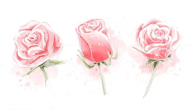 Zestaw róż akwarela malarstwo Premium Wektorów