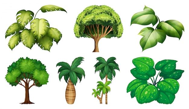 Zestaw Różnych Roślin I Drzew Premium Wektorów